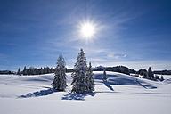 Germany, Reit im Winkl, snow-covered Winklmoosalm - SIEF006545