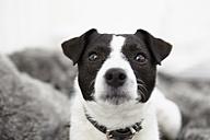 Little dog sitting on bed - RHF000707