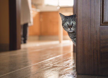 Tabby cat hiding behind a door at home - RAEF000113