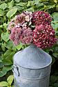 Hydrangea and cauliflower mushroom in a zinc jug - GISF000086
