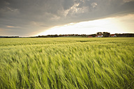Germany, Lower Saxony, view to barley field - SEF000895