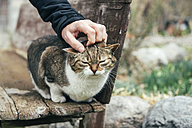 Man petting a stray cat sitting on a wooden bench - GEMF000157