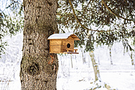 Snow-covered birdhouse hanging on a tree trunk - GEMF000160