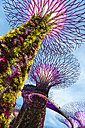 Singapore, Supertrees in Gardens by the Bay at night - GEM000170