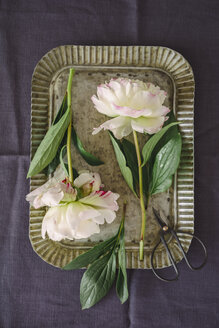 Peonies on old-fashioned tray - ECF001794