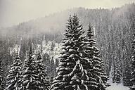 Germany, Bavaria, Grasgehren skiing area - MFF001559