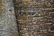 Bark, close-up - WIF001693