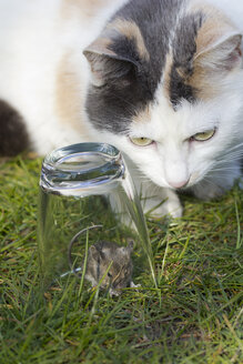 Cat watching mouse captured in a glass on a meadow - YFF000367