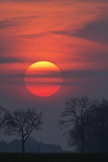 Germany, Bavaria, sunset, evening sun and trees - UMF000762