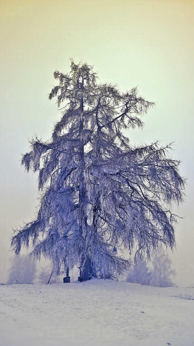 Winter landscape, Bavaria, Germany - MAEF010181 - Roman Märzinger/Westend61