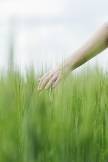Woman's hand touching green wheat ears - BZF000126