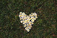 Daisies heart shaped on the grass in spring - GEMF000187