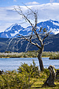 Chile, Torres del Paine National Park, dead tree at Rio Paine - STSF000742