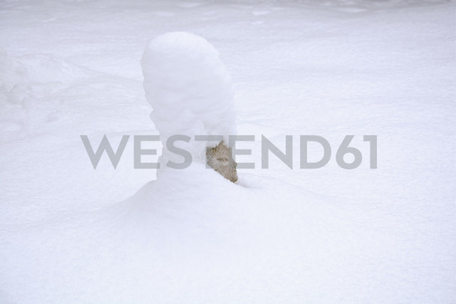 Chinese figure covered with snow in a garden - AXF000753