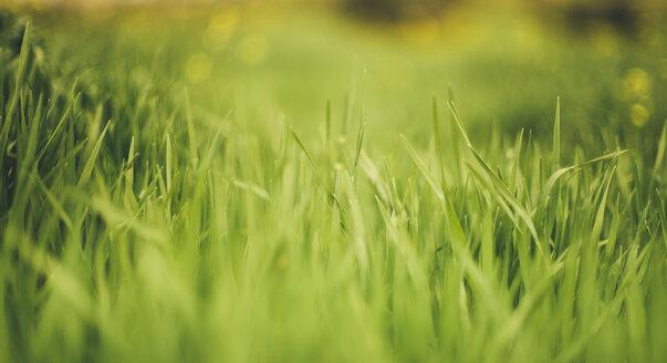 Grass - JPF000037