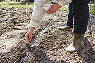 Woman sowing garden peas in a row - HAW000769