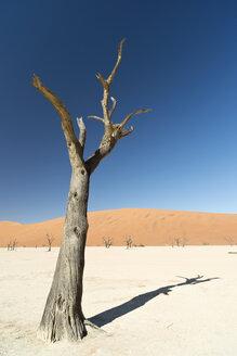 Namibia, Namib Desert, Namib Naukluft Park, Sossusvlei, Deadvlei - CLPF000098