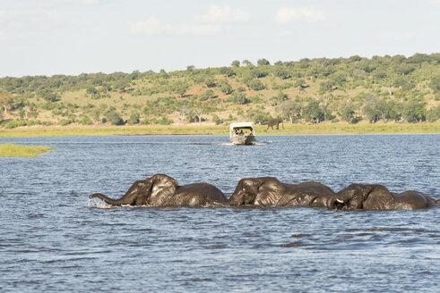 Botswana, Chobe National Park, African elephants at Chobe River - CLPF000136