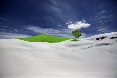 Green tree and meadow surrounded by winter landscape - VTF000418