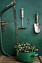 Pansies in enamel pot and gardening tools - GISF000110