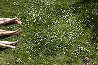 Legs of three people lying in spring meadow - MIDF000321