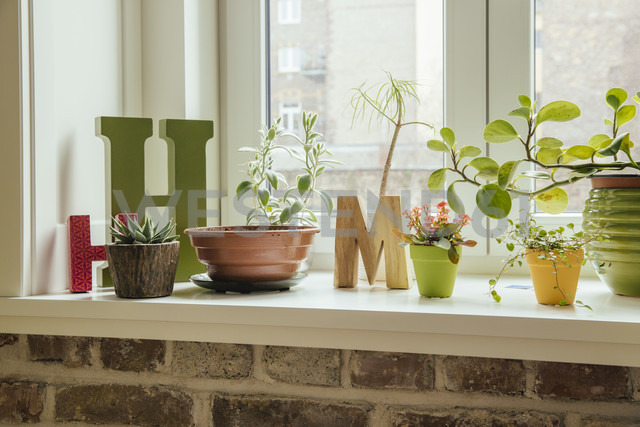 Window sill with plants and letters H and M - MFF001567
