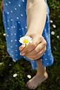 Little girl's hand presenting daisy - LVF003194