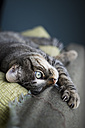 Tabby cat relaxing on a couch - RAEF000154