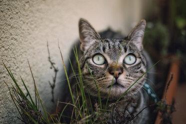 Tabby cat hiding among the plants on a terrace - RAEF000151