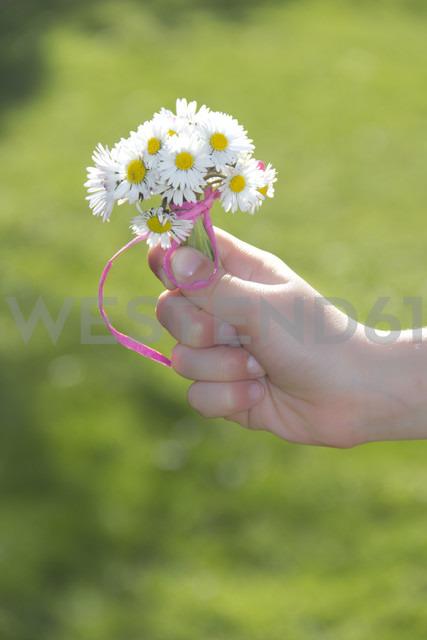 Little girl's hand holding bunch of daisys - YFF000413