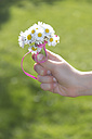 Little girl's hand holding bunch of daisys - YFF000413