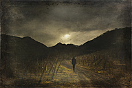 Man walking on way, vineyard - DWI000473