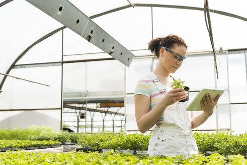 Young female gardener working in plant nursery - UUF003965