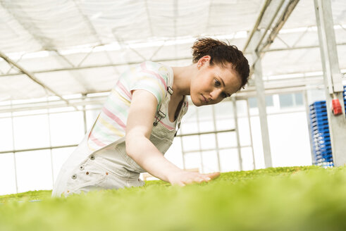 Young female gardener working in plant nursery - UUF003969