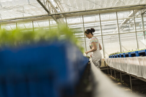 Young female gardener working in plant nursery - UUF003973