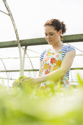 Young female gardener working in plant nursery - UUF003980