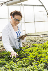 Young female gardener examining plants in nursery - UUF004004