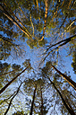 Germany, Baden-Wuerttemberg near Tuebingen, tree tops - LVF003304