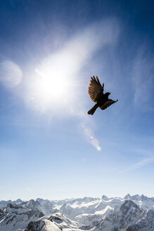 Germany, Bavaria, Nebelhorn, jackdaw in the sky - EGBF000019