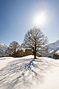 Germany, Bavaria, Allgaeu, bare trees in winter in backlight - EGBF000009