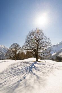 Germany, Bavaria, Allgaeu, bare trees in winter in backlight - EGBF000009