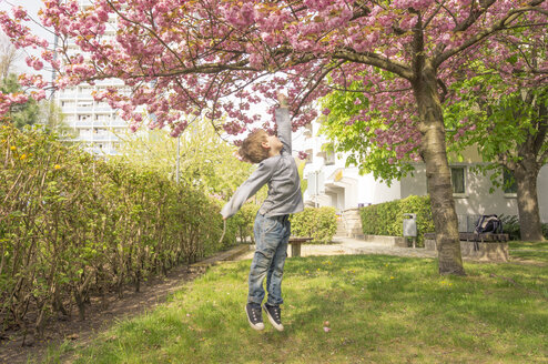 Germany, Berlin, Cherry blossom, Little boy jumping under tree - MMFF000713