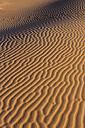 Morocco, Sahara, Erg Chebbi, pattern on desert dune - HSKF000016