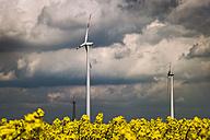 Germany, Borschemich, Power pylon and wind wheels in yellow rape field - FRF000255