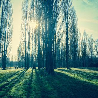 Belgium, Antwerp, Sun behind trees - PATF000050