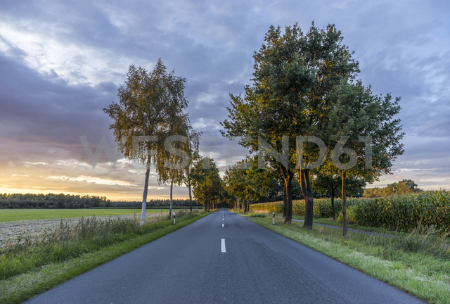 Germany, Gifhorn, tree-lined road in the evening - PVCF000424