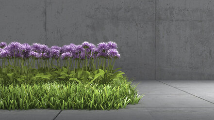 Meadow with purple blossoms in between concrete surrounding, 3D Rendering - UWF000455