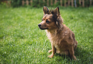 Mixed breed dog sitting on a meadow - RAEF000169