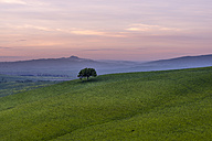 Italy, Tuscany, Val d'Orcia, rolling landscape with single tree at morning twilight - MKFF000194