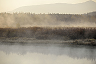 USA, Wyoming, Grand Teton National Park, coyote at Snake River in morning mist - RUEF001585